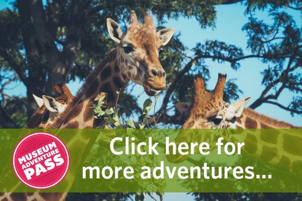 "Giraffes and a banner with the Museum Adventure Pass logo and text that says ""Click here more adventures..."""
